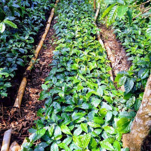 Monte Verde El Salvador 18