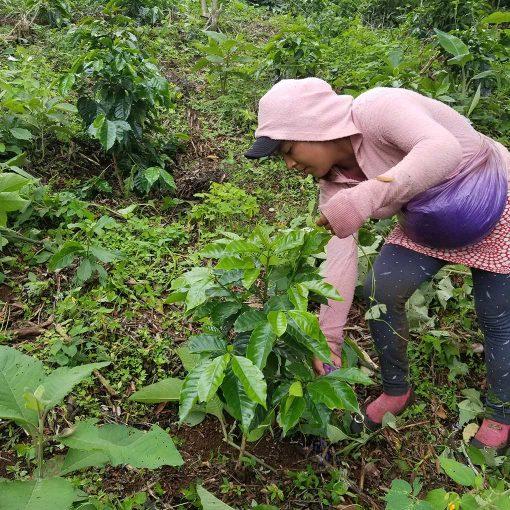 Monte Verde El Salvador 22