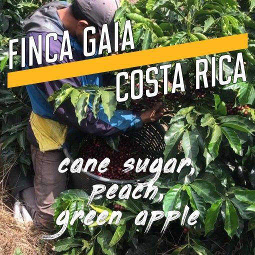 Finca Gaia, Costa Rica Coffee